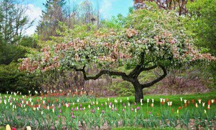 Miten mormonikirkko suhtautuu evoluutioon, kun se opettaa oppia Aadamista ja Eevasta?