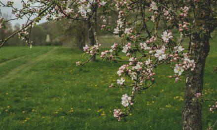 Miksi lankeemus suunniteltiin & kaunis opetus sovituksesta, jonka voimme oppia Eevalta