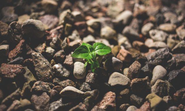 10 vinkkiä kärsivällisyyden kehittämiseen kärsimättömässä maailmassa