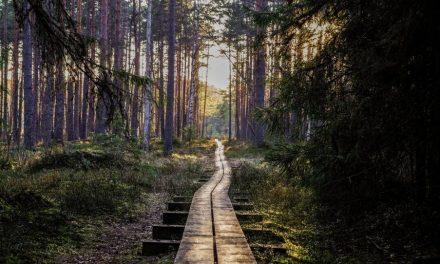 Usko ja Opit – Uskovatko myöhempien aikojen pyhät todella voivansa tulla Jumalan kaltaiseksi?
